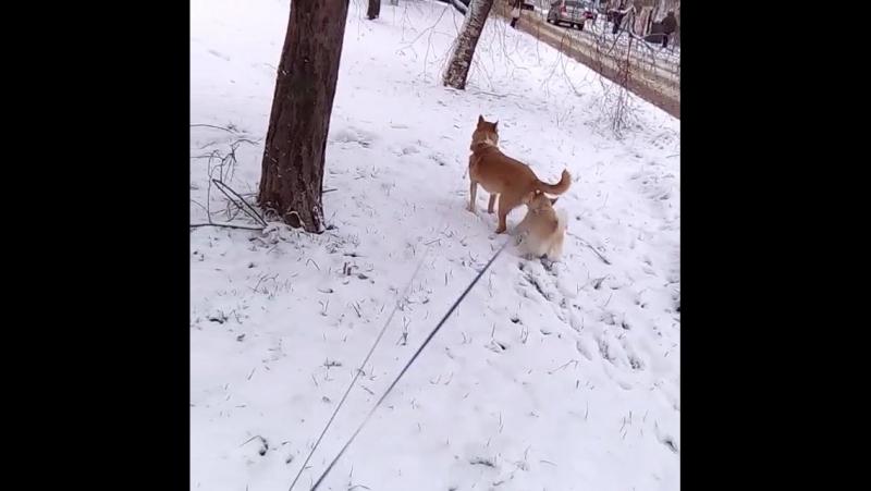 маленький тиран Ляля и Кекс на прогулке.