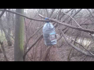 Живоловушка для белки в Покровско-Стрешнево