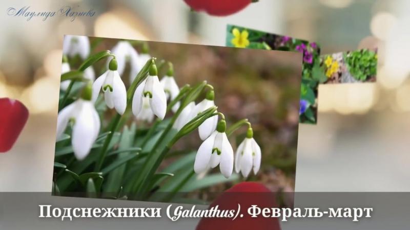 Samie pervie vesennie cveti ocen krasivoe video the earliest spring fl