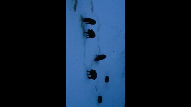 Белые озерки ⚓ кабанчики