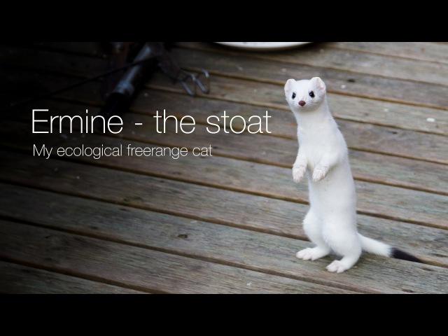 Ermine the stoat