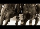 HandClap Equine Polo Music Video