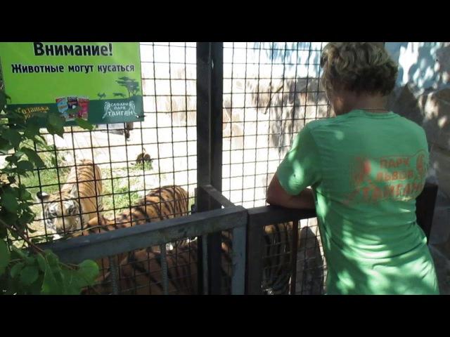 Старший кипер Леокадия и тигры Тайгана