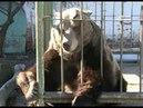 В Ярославле проснулась знаменитая медведица Маша
