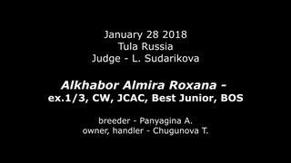 Alkhabor Almira Roxana-ex.1/3,CW,JCAC, BOB Junior, BOS (Tula, )