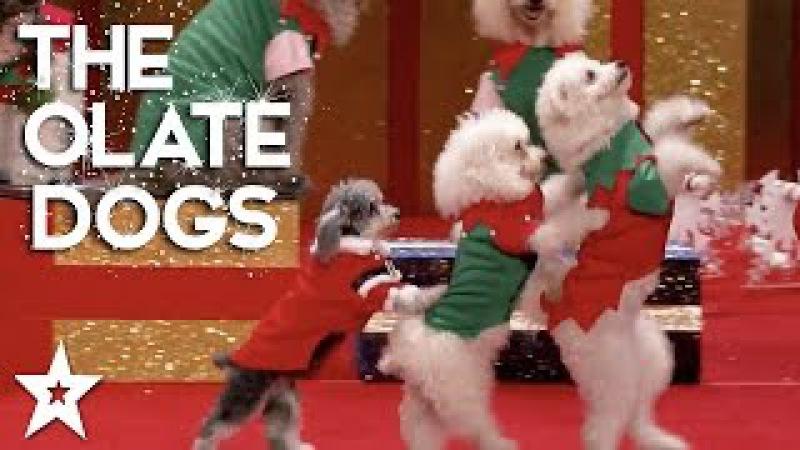 The Olate Dogs Perform a Christmas Spectacular Got Talent Global