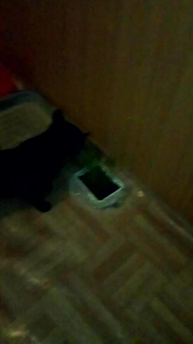 моя кошка ест траву для кошек D