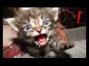 Смешные кошки Приколы про кошек и котов 2018 8 ВСЕМ ЛЮДЯМ будет смешно до слез