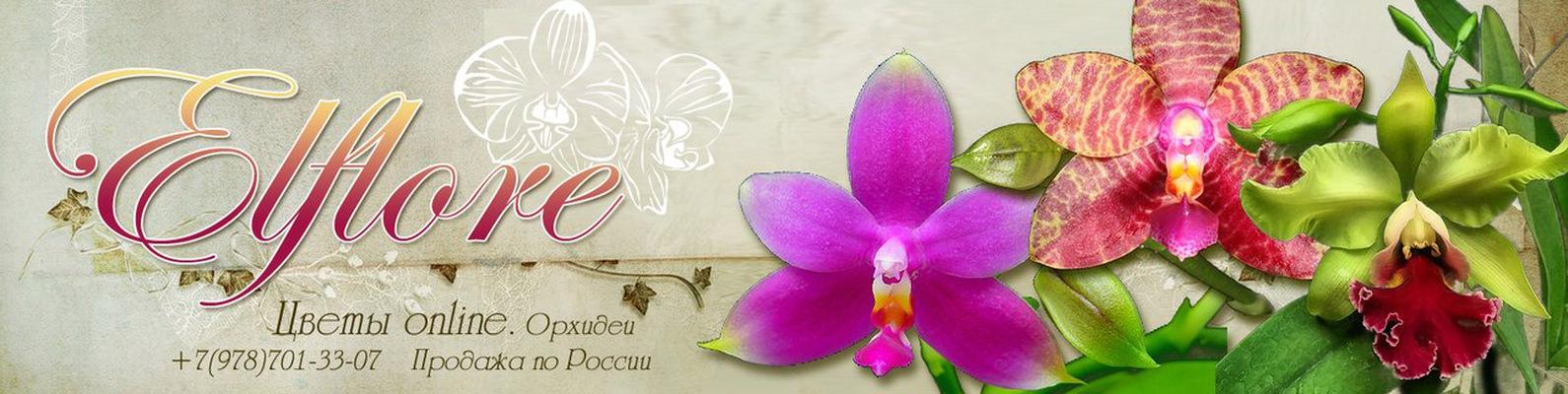 zakaz-tsvetov-orhideya-v-gorshke-evpatoriya