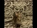 Котёнок в дар в ответственные руки