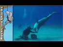 Tiger Sharks at Tiger Beach - Scuba Diving in Bahamas