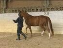 Лошадь распятая и воскресшая 2 серия из 2 2008