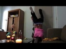 SHE BURNED HER ASS WHILE TWERKING LOL..!!
