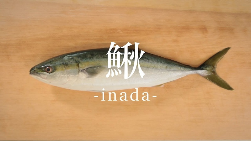鰍(いなだ)のさばき方 - How to filet Young Yellowtail -|日本さばけるプロジェクト