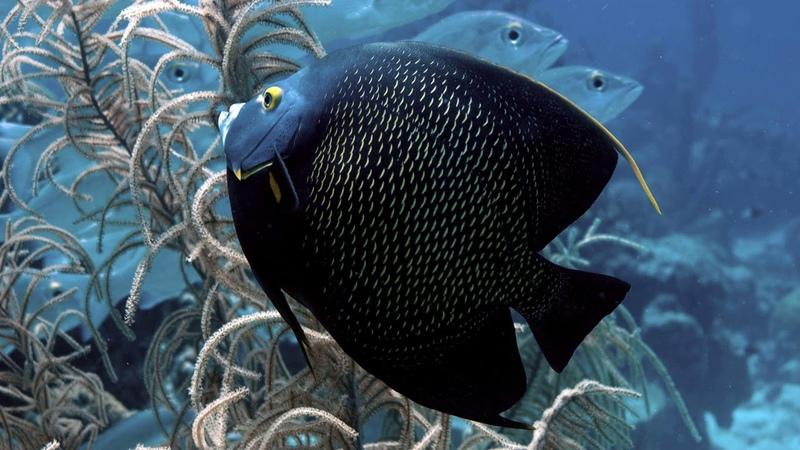 Картинка рыбы ПОДВОДНЫЙ МАКРО ПЯТНА РЫБКА ЧЁРНАЯ МИР ВОДОРОСЛИ