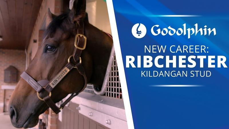 Ribchester | A new life at Stud