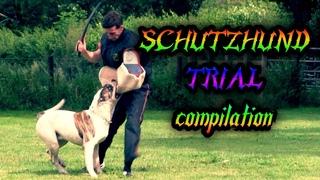 IPO Schutzhund Trial July 2017 Protection compilation Doberman,Bulldog,GSD
