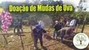 Poda e Doação de Mudas de Uva em São Paulo 20 21 de Julho