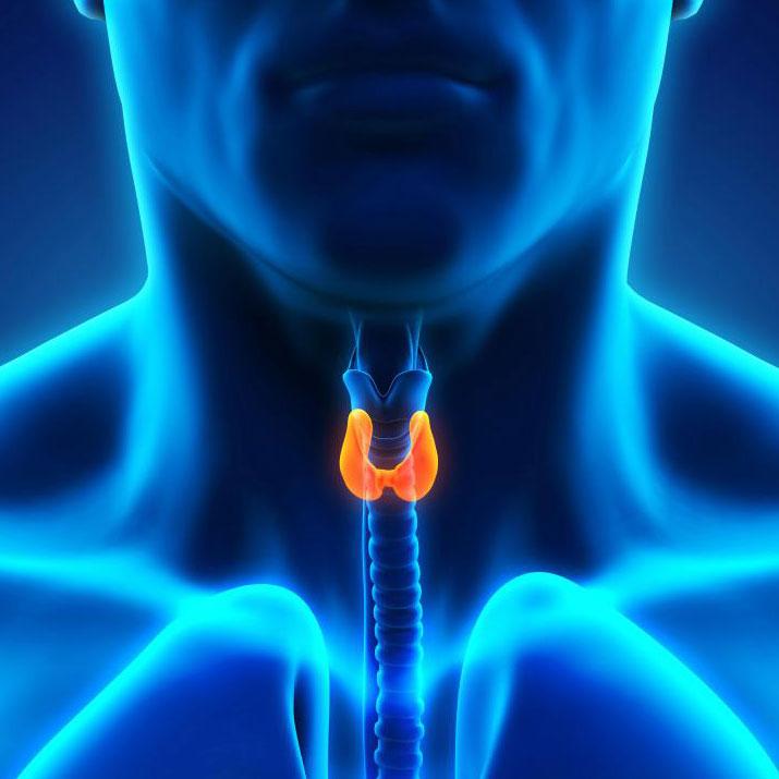 Любой рак с участием щитовидной железы будет считаться эндокринным раком.