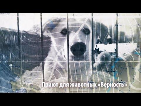 Экс сварщик с приютом для собак ЧЕЛОВЕК НА КАРТЕ