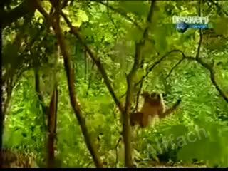 Развлечение обезьяны в джунглях