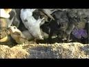 Hunde lebendig verbrannt für die Fussball EM 2012 in der Ukraine - ARD Brisant