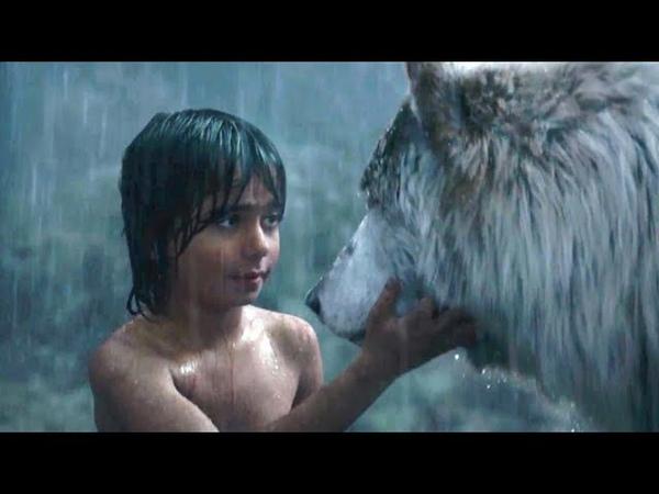 Красивая Песня Волчонок Александр Маршал