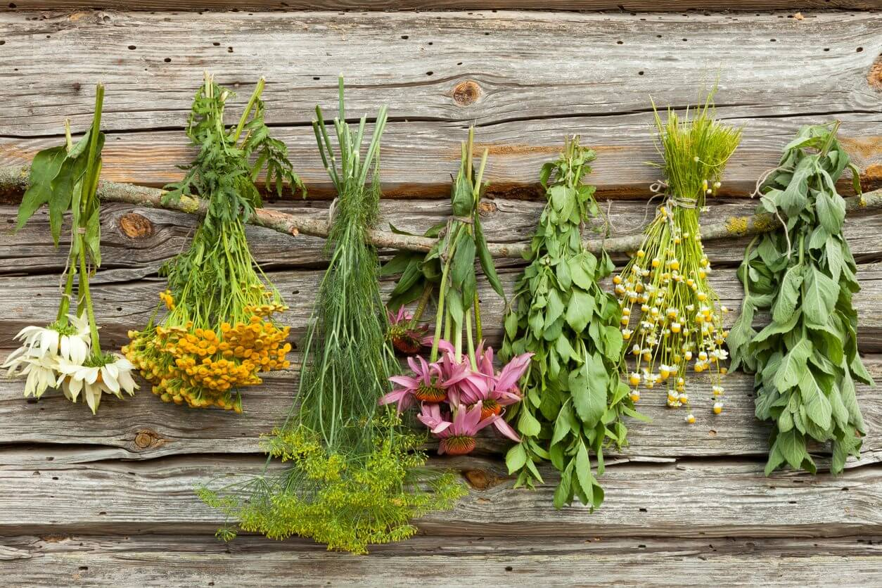 Фото и описание лекарственных трав на даче