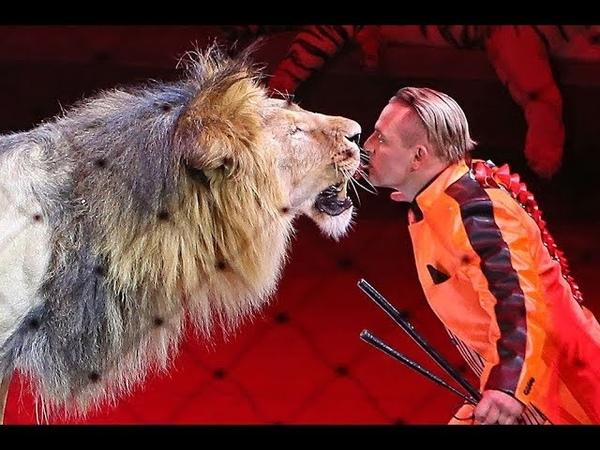 Животные в цирке развлечение или издевательство Дискуссия на RTVI