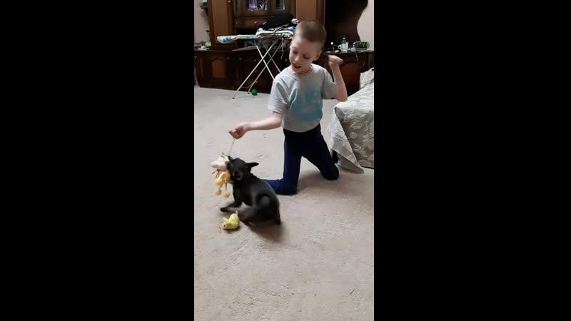 Игры Андрейки со своим щенком Арчи сентябрь 2019 г.
