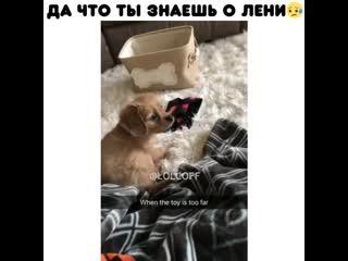 Приколы   Юмор   Фейлы   Cмешное видео   Угар   Жесть   Шутки   Ржач   Ржака