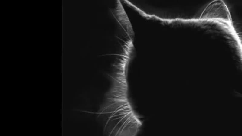 Кошка и ее человек _ Саша Бест _ Читает - Марина Никитина