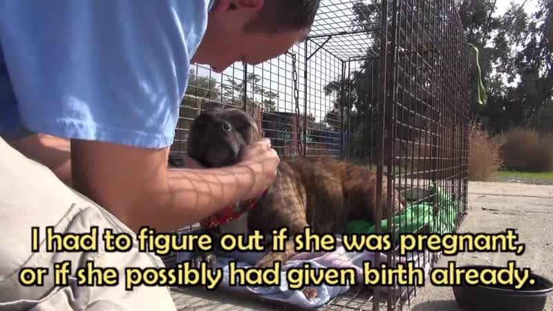 Rescuing a family of dogs with help from iPhone and You Tube Please share
