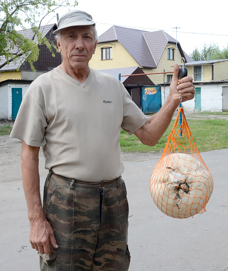 Липчане нашли гриб-«ядро» — Изображение 1