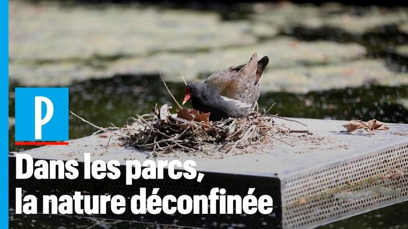 Des fraises des bois ont poussé les parcs parisiens après le confinement