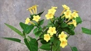 ABC TV | How To Make Mirabilis Jalapa Paper Flower - Craft Tutorial