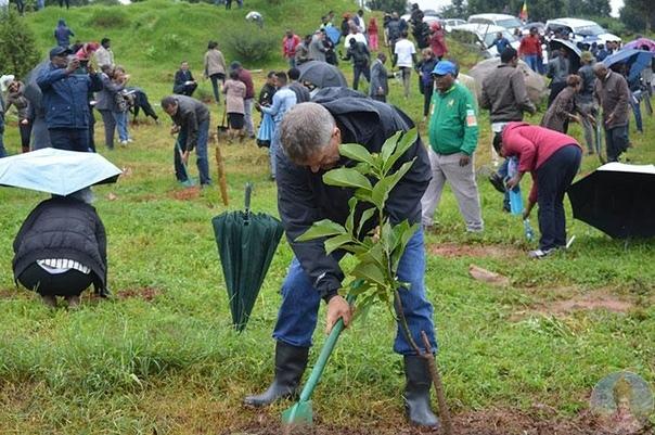 Рекорд, которым стоит гордиться: в Эфиопии люди совершенно разных социальных слоев и мировоззрений высадили более 350 саженцев за 12 часов