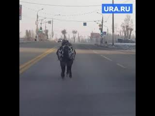 По Магнитогорску бегает пони
