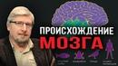 Сергей Савельев. Происхождение мозга