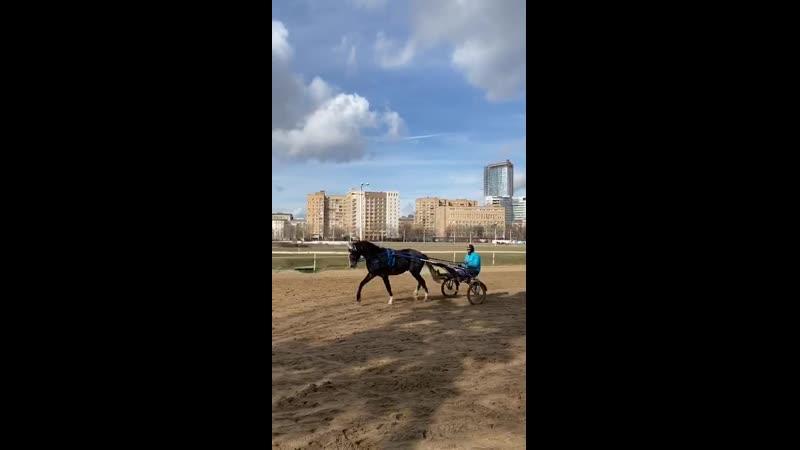 Попечитель 49 сер жер орл Попрек Попрыгунья Никотин 14 02 2018 г р
