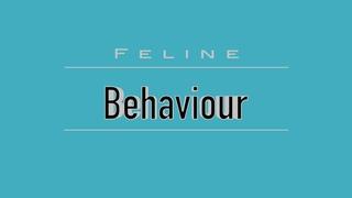 Кошачье поведение / Feline Behaviour