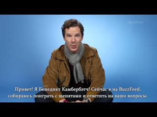 Benedict playing with puppies|rus sub