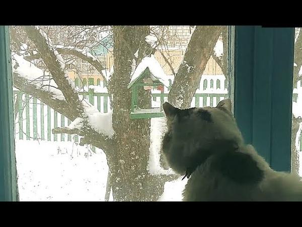 Успокаивающие звуки зимнего дня. Звук камина, старинных часов и мурчание котика.