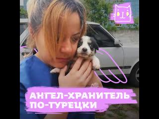Девушка спасает сотни собак