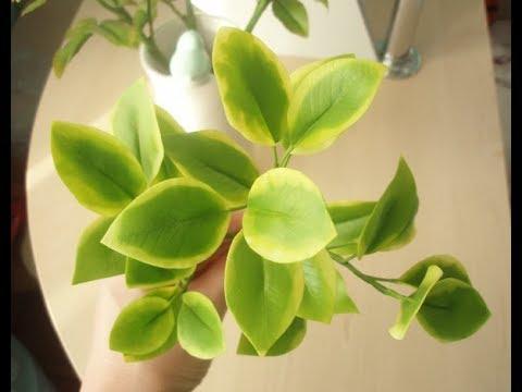 Ветка фикуса с двухцветными листьями из холодного фарфора