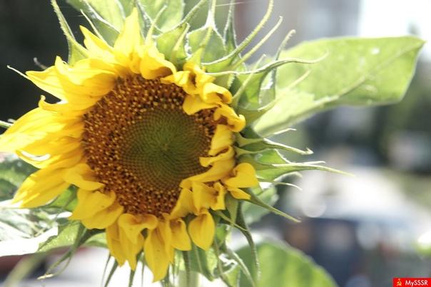 Лучшие растения-соседи для овощей