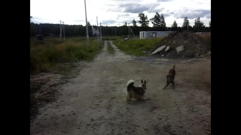 Как у собачуленьки приключились гулиньки!)
