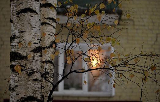 самое фото березка под окном классический
