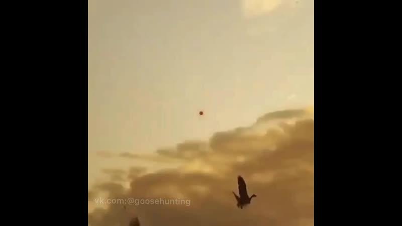 Охота на гусей Налёт