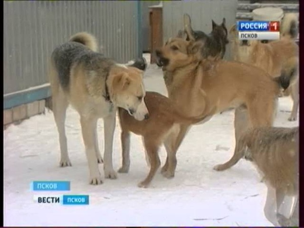 Вести-Псков 02.02.2016 19-40